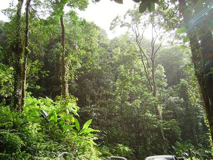 Martinik, Tropický les poblíž Fond St-Denis